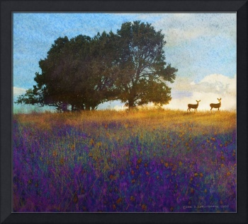impressions deer on the hill