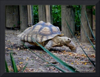 Tortoise on the Move