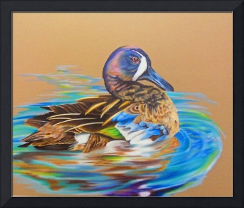 Bluewinged Teal