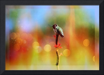 Winter Hummer with Light and Border