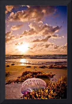 The Beaching of a Jellyfish-2017April 18, 2012
