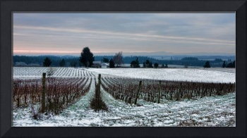 Winter at the Vineyard