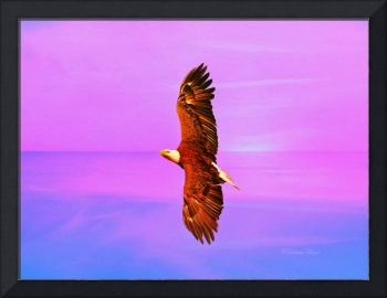 Eagle Series Painterly