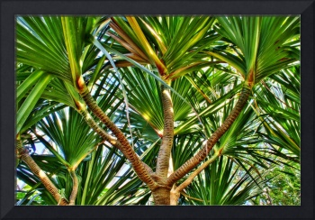 Tropical Palm Tree (HDR)