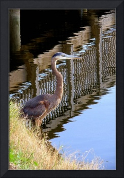Heron by the Bridge