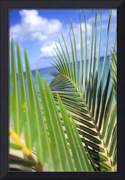 View Through Green Palm Leaves Of Blue Sky, White