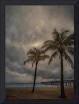 Two Palms on Dania Beach,FL