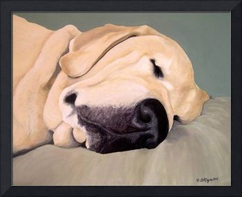 Yellow Labrador Retriever Sleeps