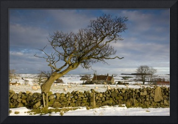 Rural Scene, North Yorkshire, England