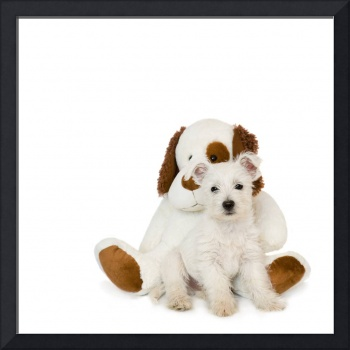 Westie Puppy and Teddy Bear
