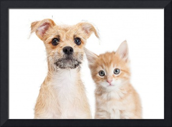 Adorable orange kitten and puppy closeup