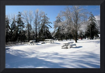 winter at the park
