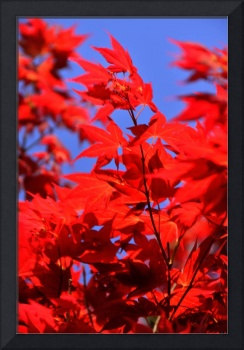 The Reds of Spring