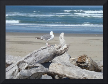 Coastal Seagull art prints Beach Driftwood Birds