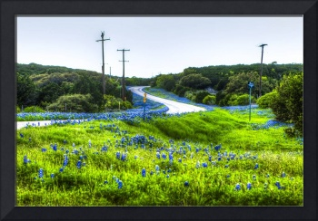 #54-Blue Bonnet Windy Road