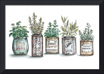 Herbs in Spice Tins
