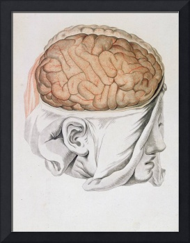 The Brain, from 'Traite d'Anatomie de Cerveau'