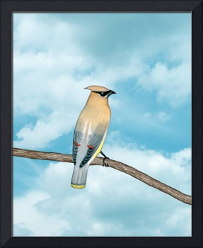 cedar waxwing and blue sky