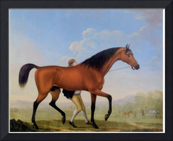 Duke of Ancaster's Bay Stallion, Blank (c. 1770)