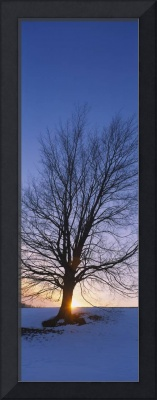 Silhouette of a bare tree at dusk