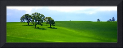 Four Trees On The Hill