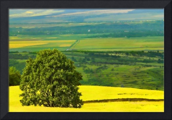 Tree in yellow field