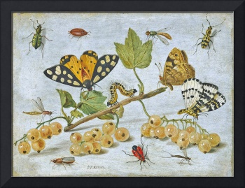 Vintage Insect Painting