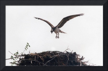 Osprey One - Cleared for Landing