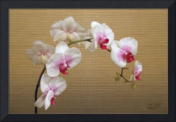 Orchid Blossoms and Bamboo Shade