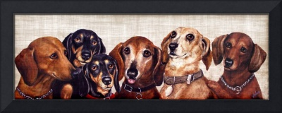 6 Dachshunds
