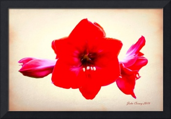 Red Amaryllis after Georgia O'Keefe