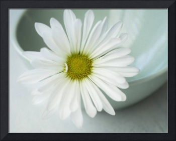 White Daisy in a mint green bowl