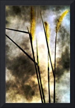 WEEDS AND CLOUDS, v 2, Edit G