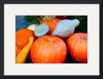Pumpkin Harvest by Jacque Alameddine