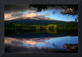 Trillium Reflection