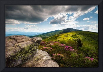 Roan Mountain Rhododendron Bloom