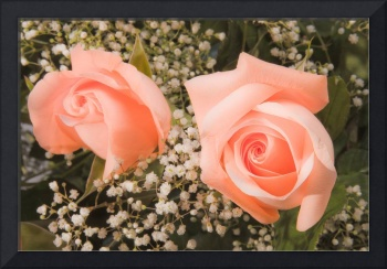 Pink Roses Fine Art Photography Print