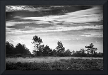 Ashdown Forest in Black and White