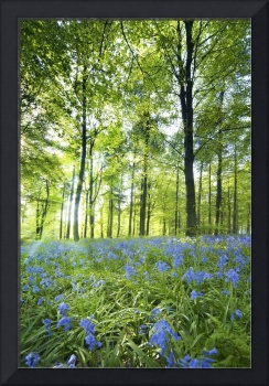 Wildflowers In A Forest Of Trees, Yorkshire, Engla