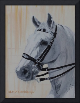 Lippizan horse portrait with special bridle