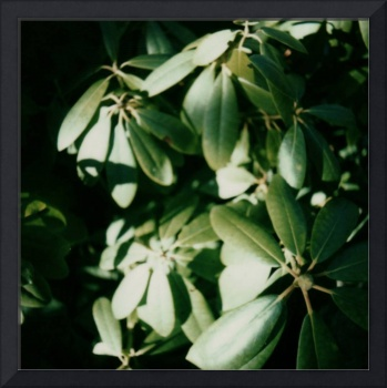 Umbrella Plant Polaroid