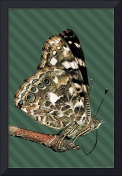 Butterfly Love Collection (6 of 7)