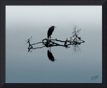 Heron On Submerged Tree Branch