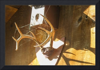 Whitetail Antlers II