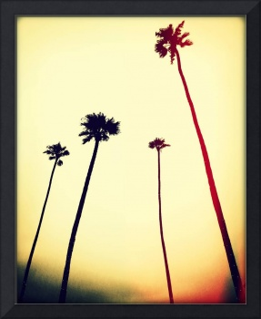 Catalina Palms 2