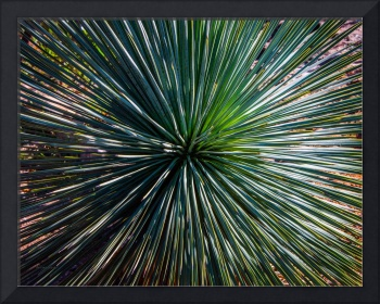 Abstract Nature Desert Cactus Photo 207 Blue Green