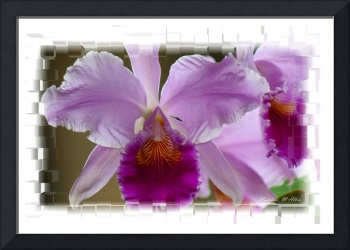 Orchid #5