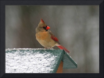 Female Cardinal in Winter