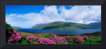 Killary Harbour With Wildflowers, County Galway, I