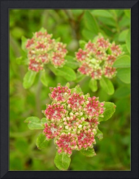 Botanical - Wild Beauty - Outdoors Floral
